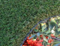 Olive Artificial Lawn