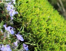 Synthetic Turf For Public Spaces